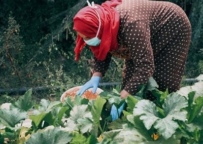 Sustainable Farming in Gaza